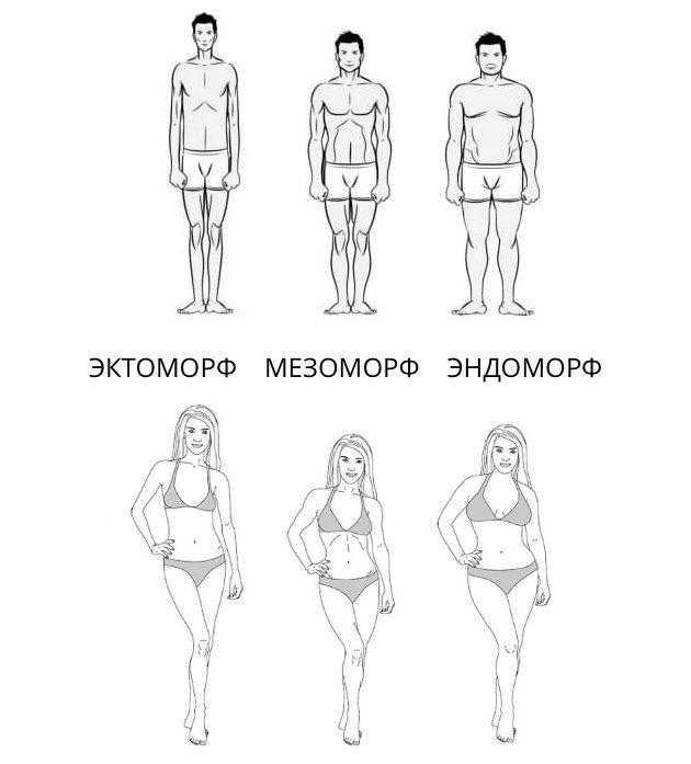 Мезоморф: кто это, как определить и отличить от других соматотипов?