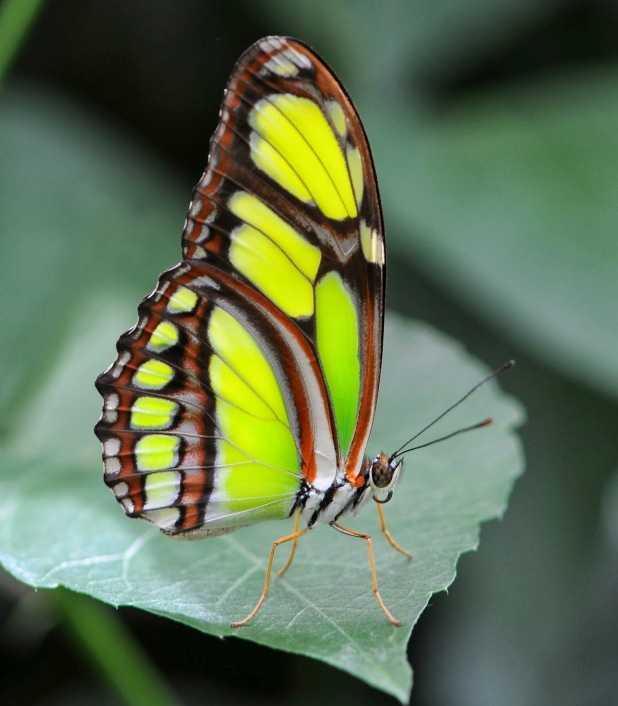 Упражнение бабочка для растяжки в домашних условиях быстро