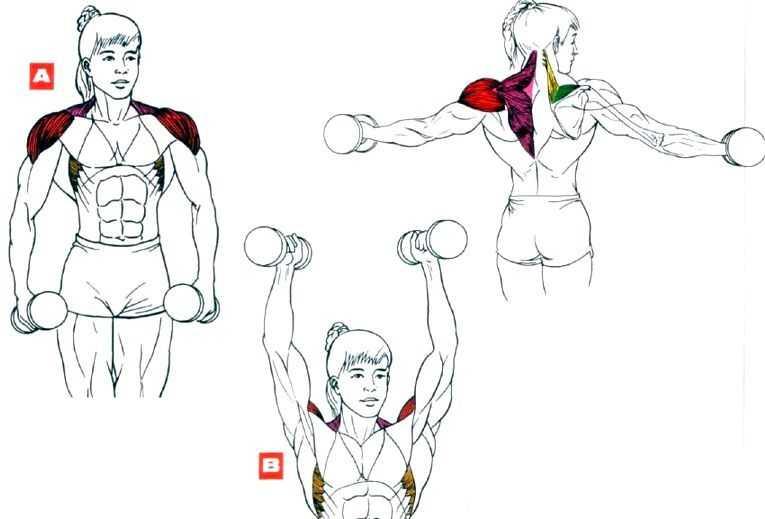 Топ-8 упражнений с гантелями на плечи для дома и зала
