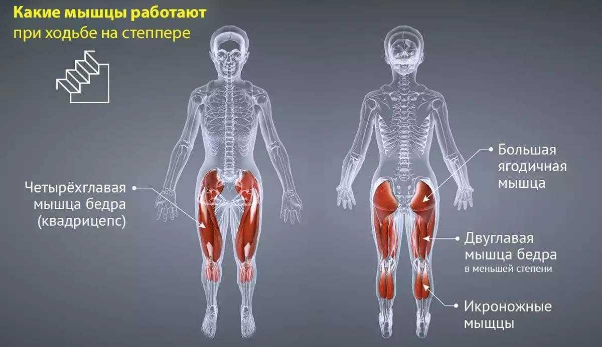 «мышцы верхней конечности». — анатомия и физиология. лекции.
