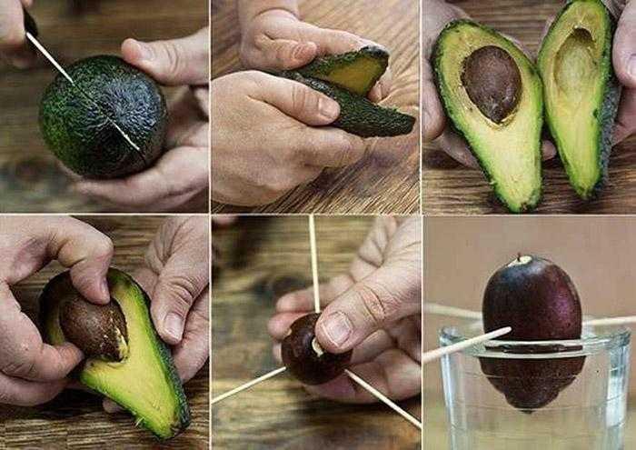 Авокадо: 10 полезных пп-блюд из авокадо + в чем польза