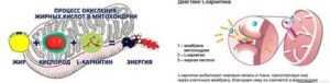 Левокарнитин (l-карнитин) для похудения, как принимать, инструкция