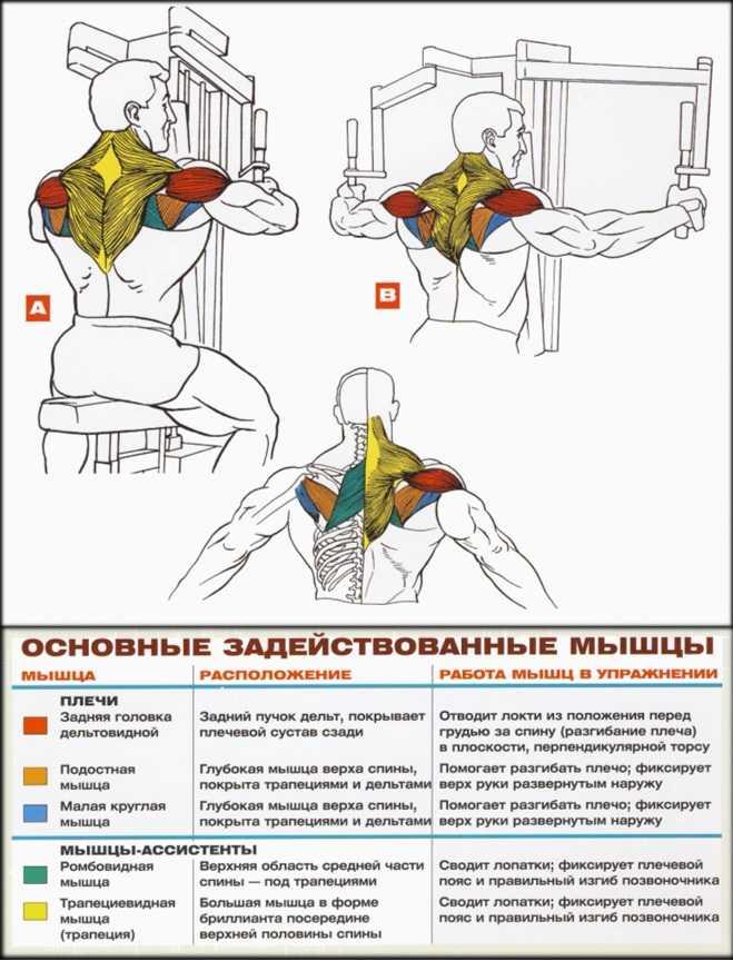 Разводка рук в тренажере - всё о спортивных тренировках
