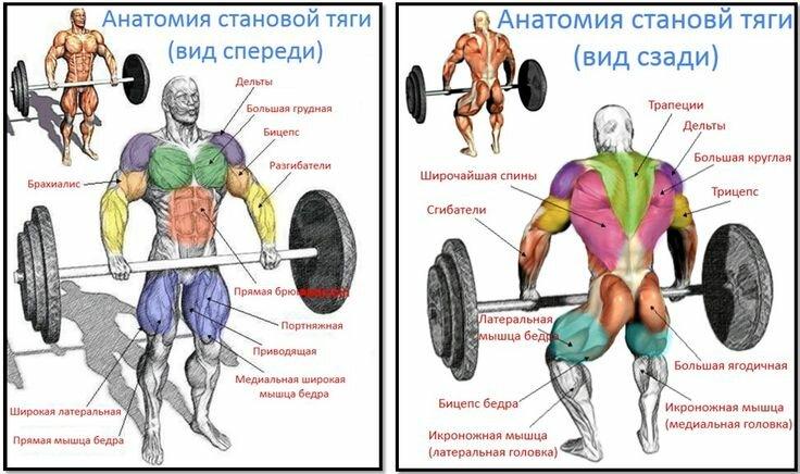 Становая тяга — мощное базовое упражнение, способствующее росту силы и укреплению мышц Правильная техника выполнения классической тяги, секреты и правила