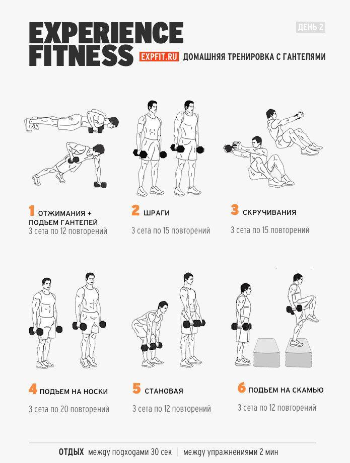 Как накачать предплечья – упражнения с гантелями и штангой