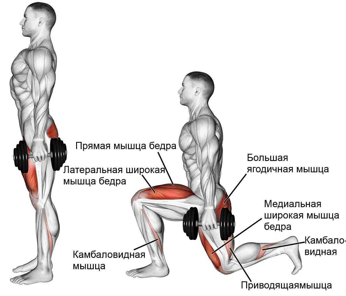Фитнес-инструктаж: как правильно делать выпады для ягодиц, техника выполнения с гантелями и без | rulebody.ru — правила тела