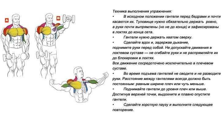 Эффективная программа тренировок с гантелями дома