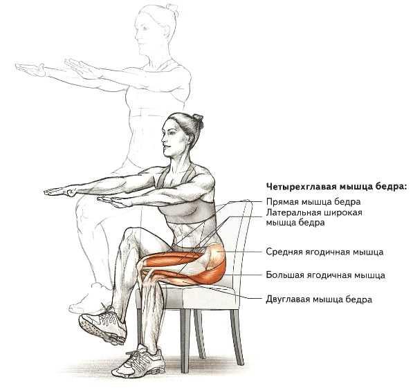 Тренируем ноги мощные квадрицепсы