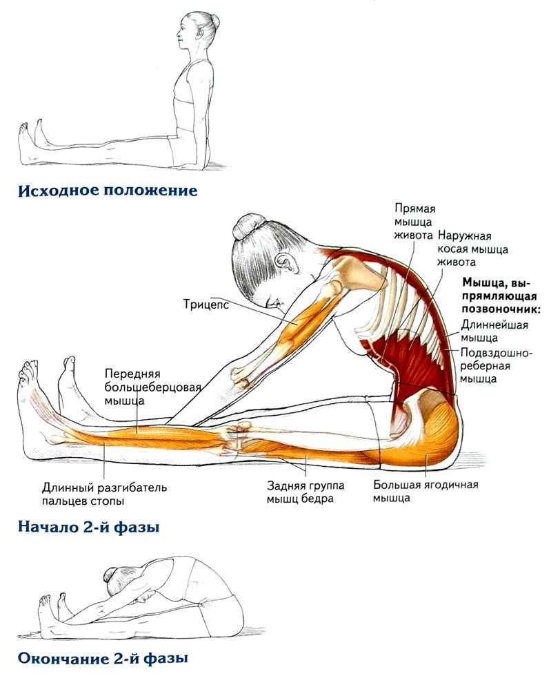 Растяжка после тренировки: зачем нужен стретчинг, основные упражнения
