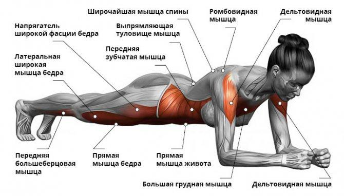 Программа отжиманий для тех, кто хочет иметь красивое тело - лайфхакер