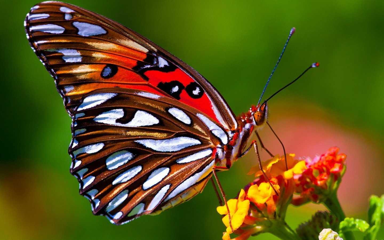 Упражнение бабочка для растяжки и здоровья