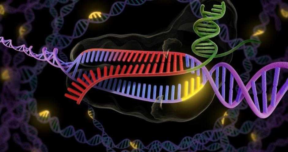 Нобелевскую премию по химии присудили за метод редактирования генома crispr/cas9 -  наука - тасс