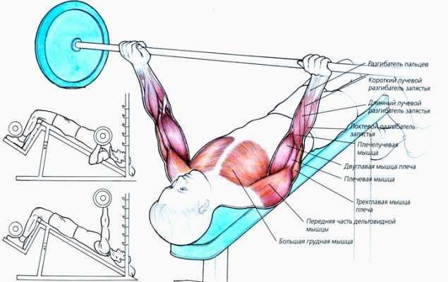 4 отличных упражнения на верх грудных мышц | livasteel