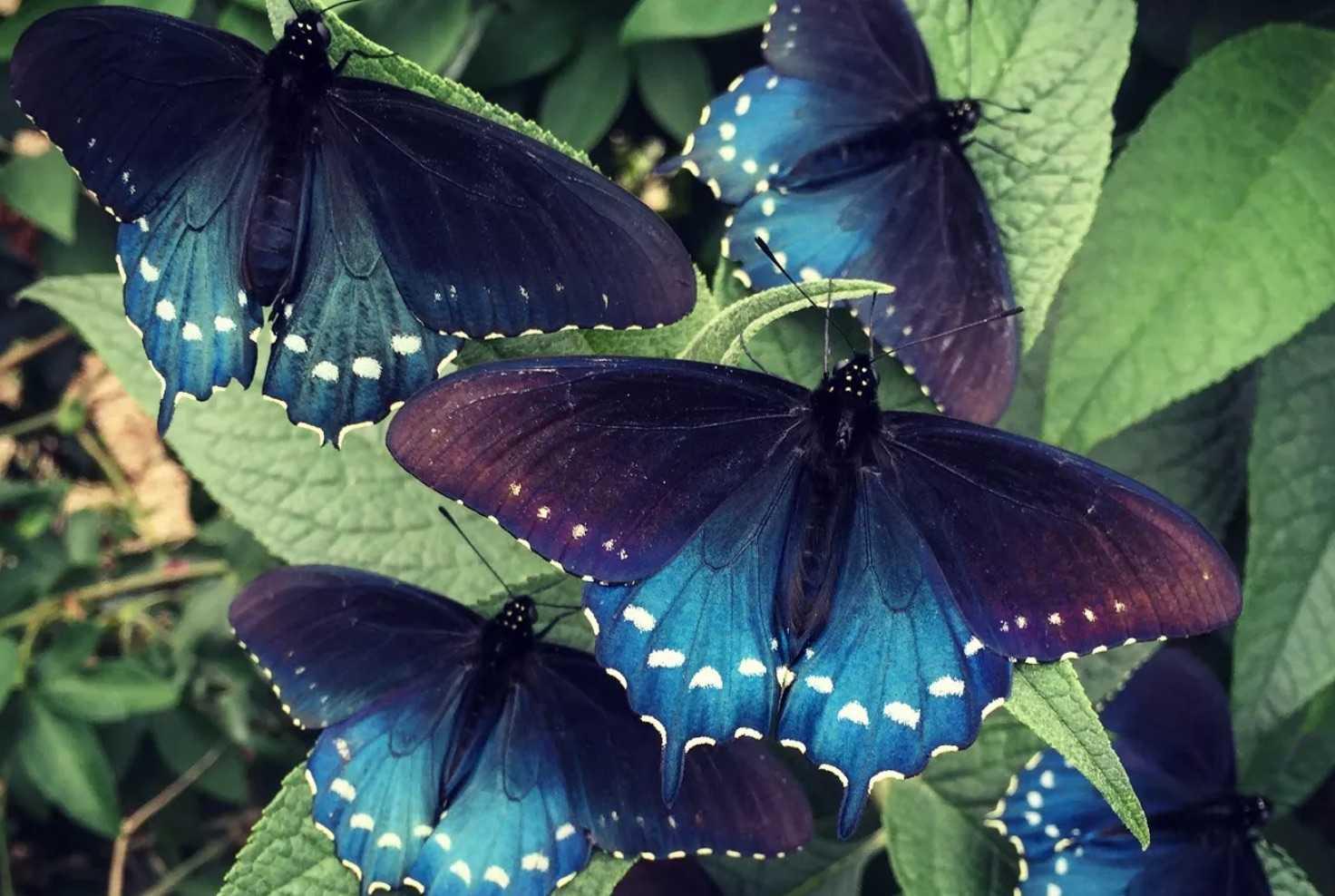 Упражнение бабочка: техника для женщин и мужчин, влияние на похудение живота и боков