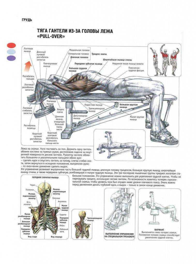 Как накачать внутреннюю часть грудных мышц