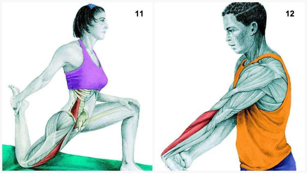 Растяжка после тренировки: 30 упражнений + план (фото)