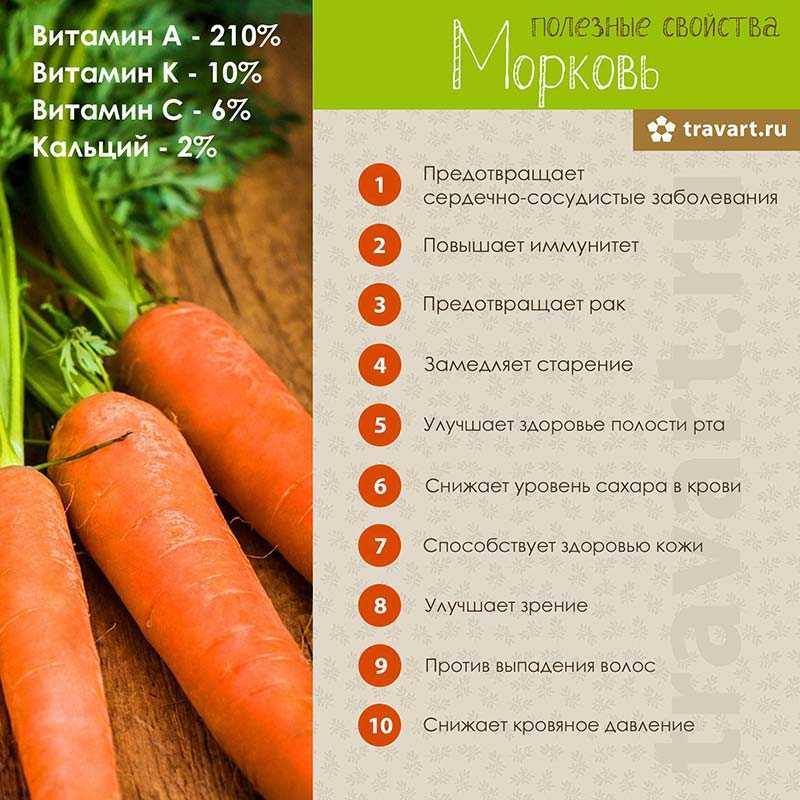 Польза и вред моркови для организма человека, калорийность и состав