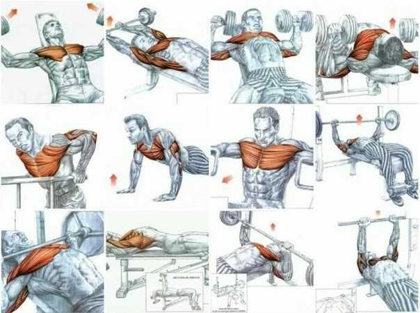 Отжимания на брусьях —техника упражнения, плюсы для развития мышц груди
