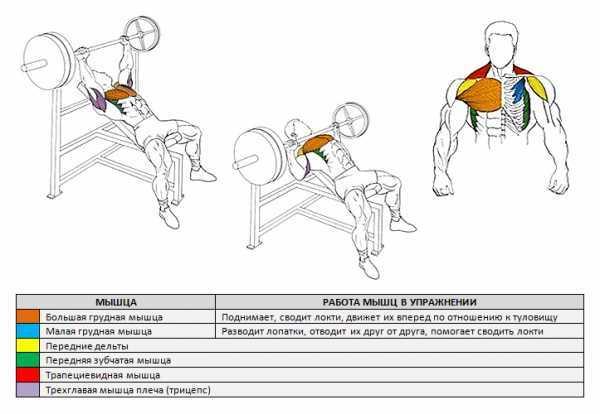 Отжимания на трицепс: проработка трёхглавой мышцы | rulebody.ru — правила тела