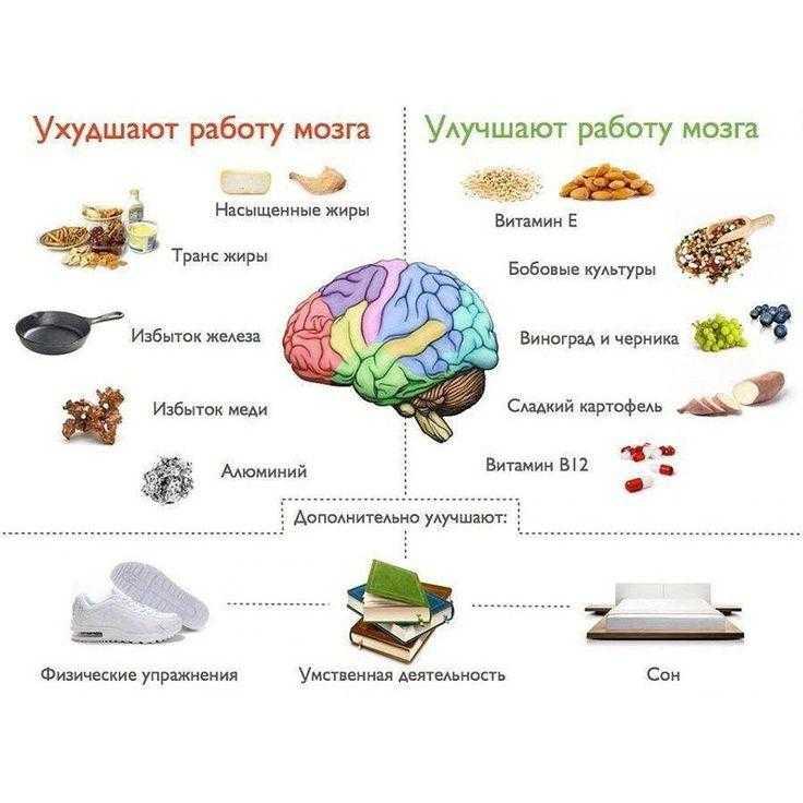 Продукты для улучшения памяти и внимания у взрослых, детей: полезная еда для ума