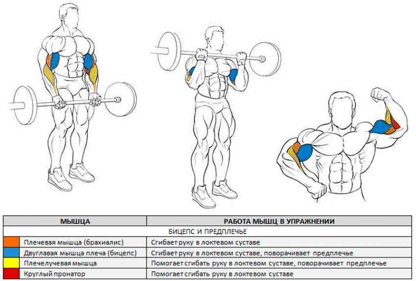 Комплексы упражнений со штангой или грифом для мужчин и женщин в домашних условиях | rulebody.ru — правила тела