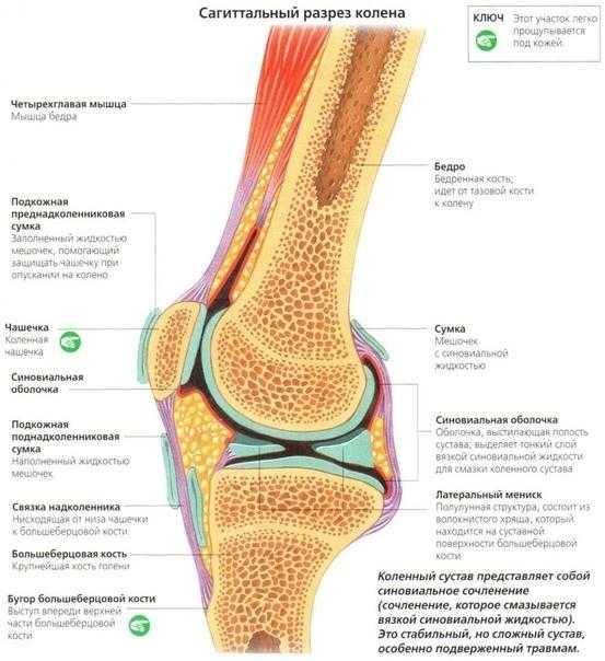 Хрустят колени при приседании: рекомендации по выполнению упражнения