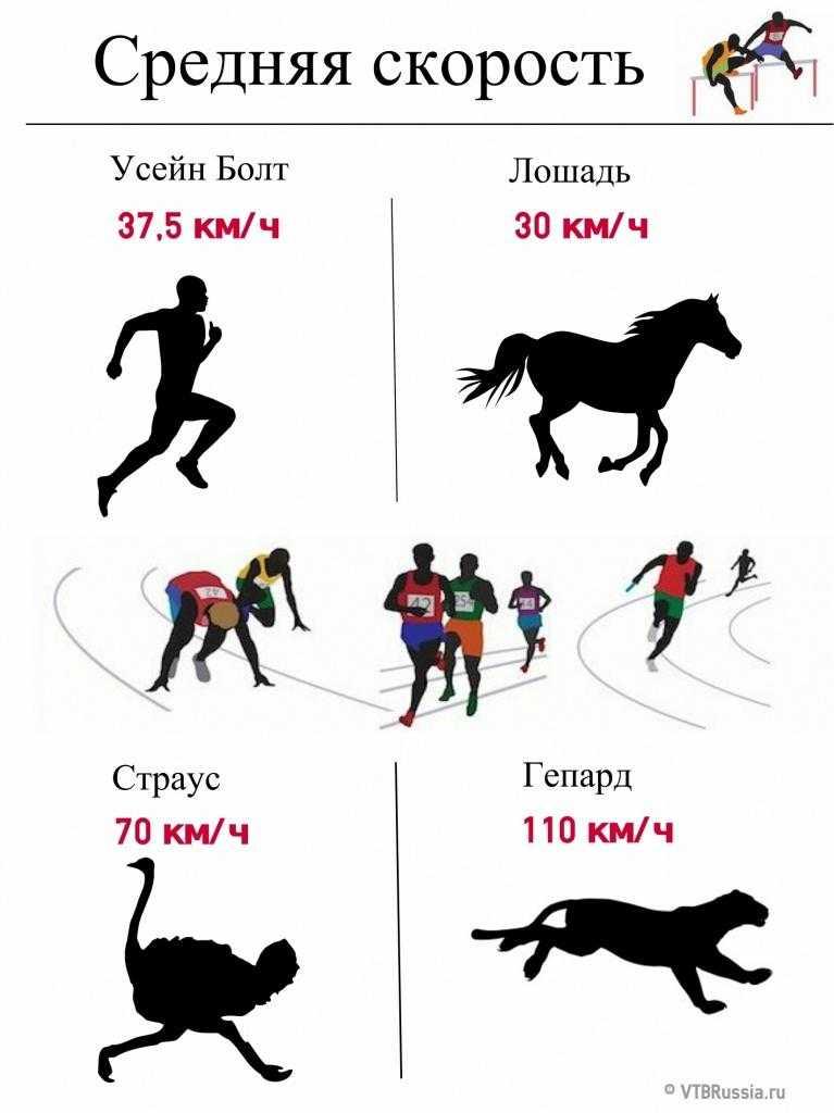 Скорость бега человека будет разной в зависимости, к примеру, от преодолеваемой дистанции Максимальная скорость при беге и средние показатели