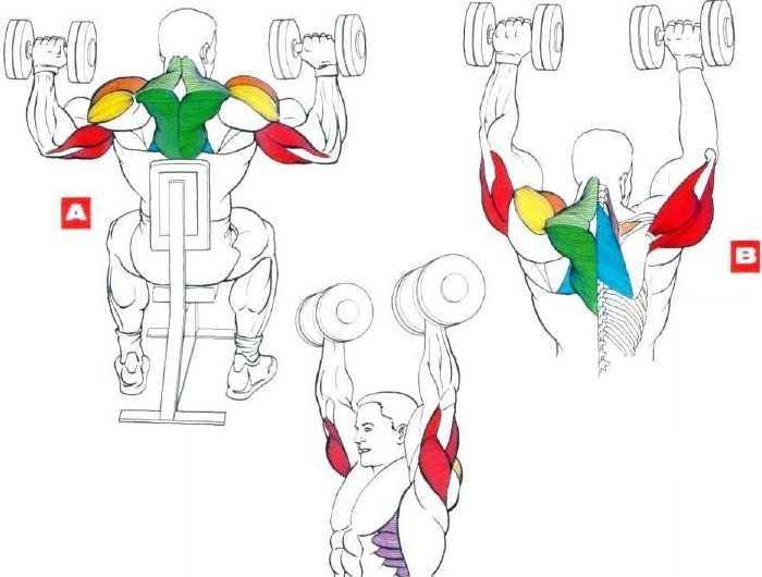 Лучшие упражнения на заднюю дельту: сила и мощь ваших плеч!