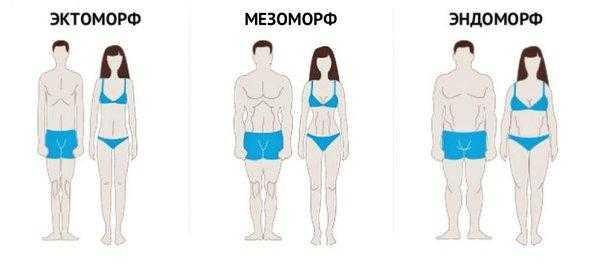 Кто такие мезоморфы?