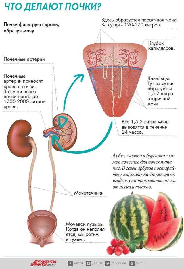 Энциклопедия - мочекаменная болезнь
