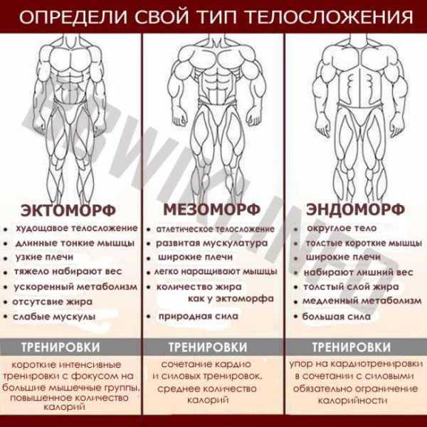 Эктоморф: кто это, какое у них телосложение и как определить?