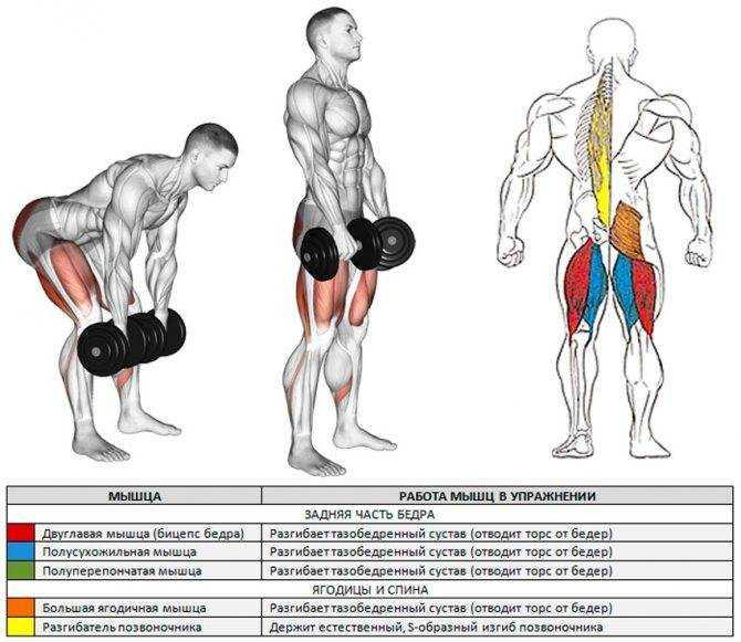 Классическая становая тяга (часть 1)— правильная техника выполнения для мужчин! коротко и ясно