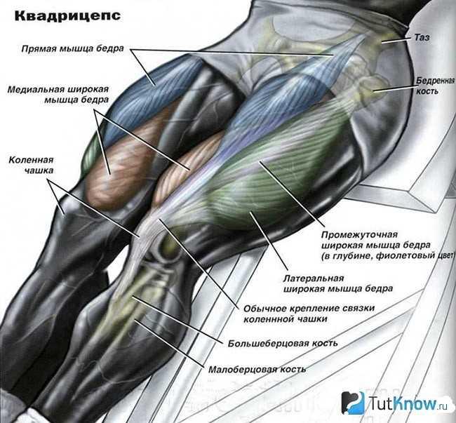 Важная часть тренировки ног – развитие квадрицепса – все боевые искусства и единоборства