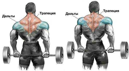 Упражнения на трапецию в тренажерном зале для мужчин. упражнения для трапециевидных мышц спины   здоровое питание