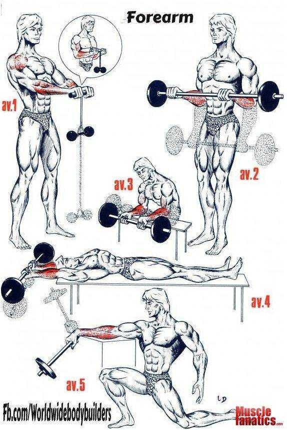 Эффективные упражнения с гантелями для мышц рук | rulebody.ru — правила тела