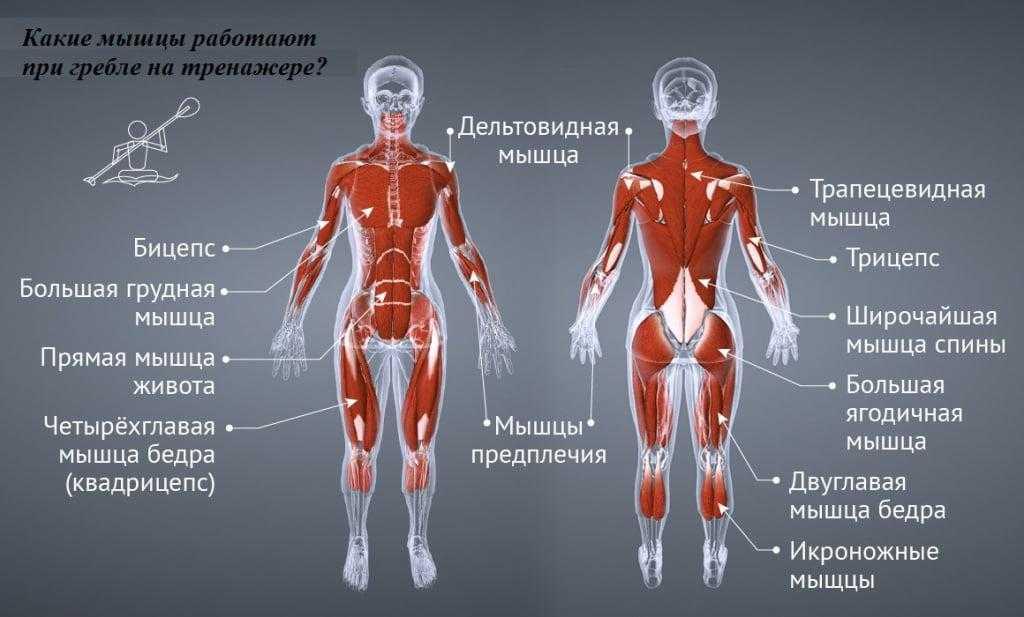 Какие мышцы работают при беге | школа бега run studio