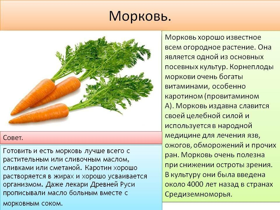 Какая польза от моркови для организма женщины? где применяется данный корнеплод?