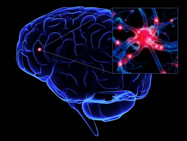 Самые продуктивные часы работы мозга