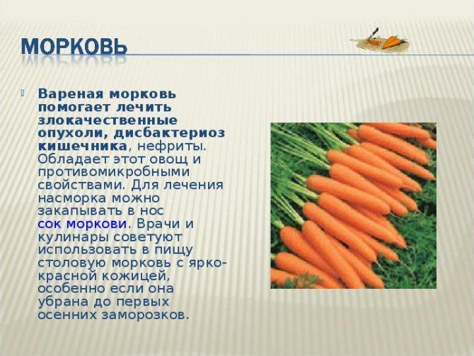 Как похудеть на морковной диете и полезные свойства моркови для быстрого похудения