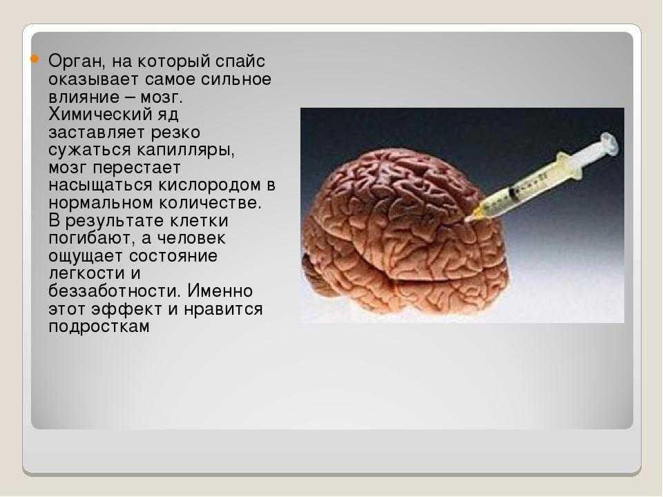 Какие продукты повышают мозговую активность и полезны для умственной деятельности — топ 8