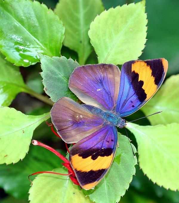 Как делать упражнение бабочка — life-sup.ru