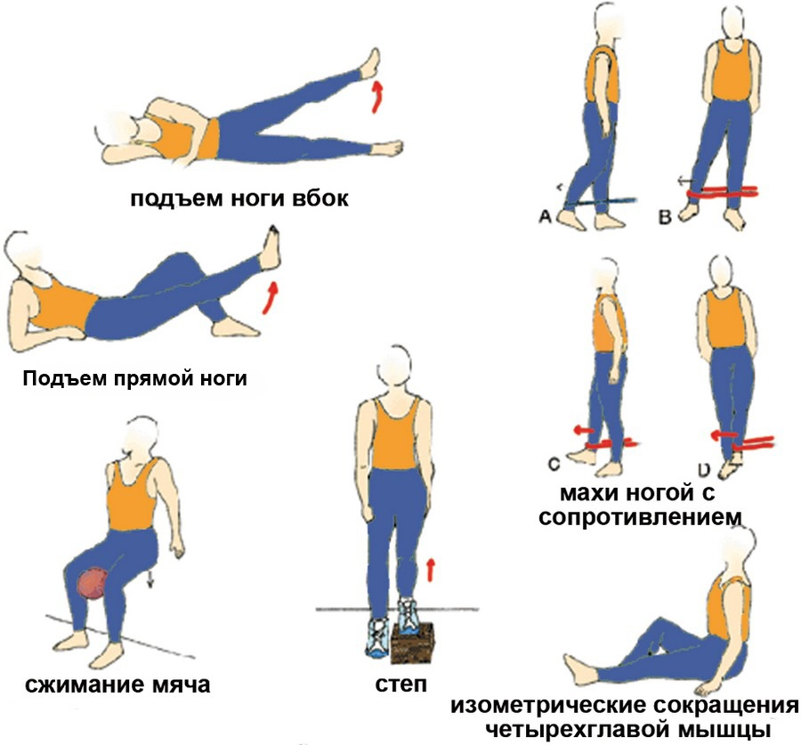 Разгибание ног в тренажере – тренировка квадрицепса