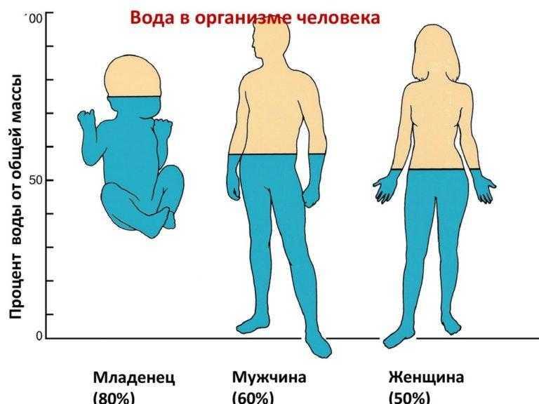 Как вывести лишнюю жидкость из организма для похудения в домашних условиях