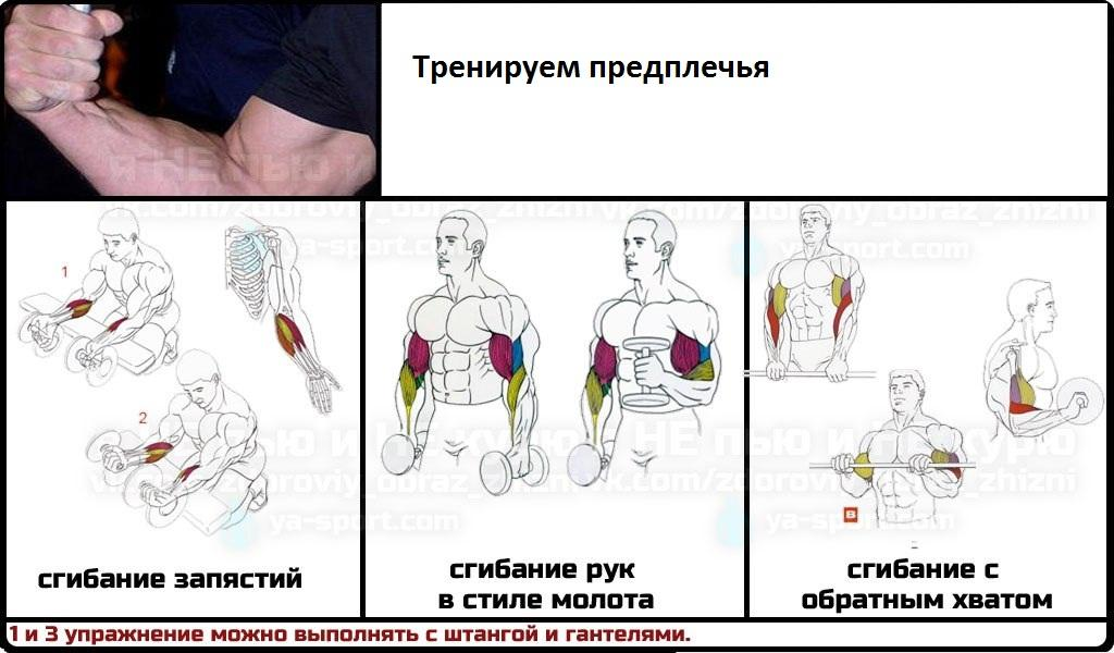 Упражнения для растяжки рук и плеч: примеры, виды, польза