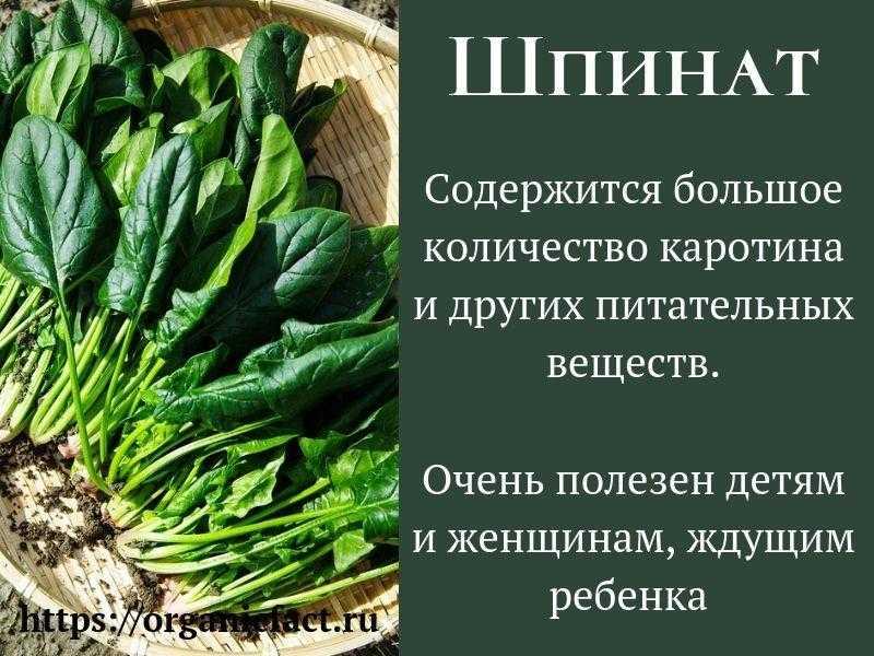 """""""шпинат – полезные свойства, рецепты и противопоказания «генерала листовой зелени»"""""""