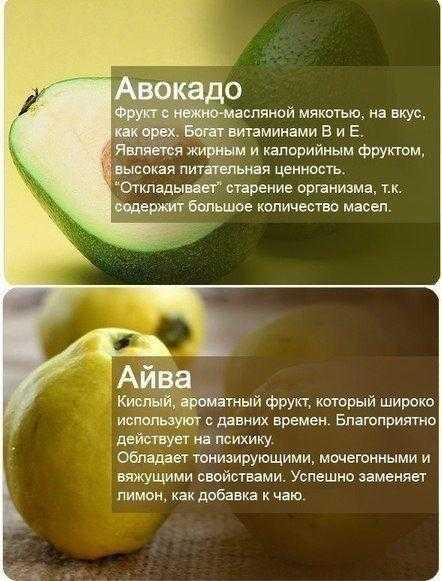 Польза и вред авокадо. масло авокадо в косметологии. советы