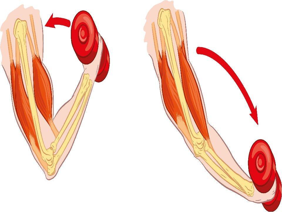 Крепатура мышц: что делать, если болят мышцы после тренировки