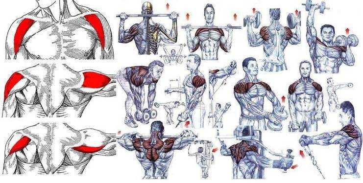 Самые эффективные упражнения на трицепс в тренажерном зале | livasteel
