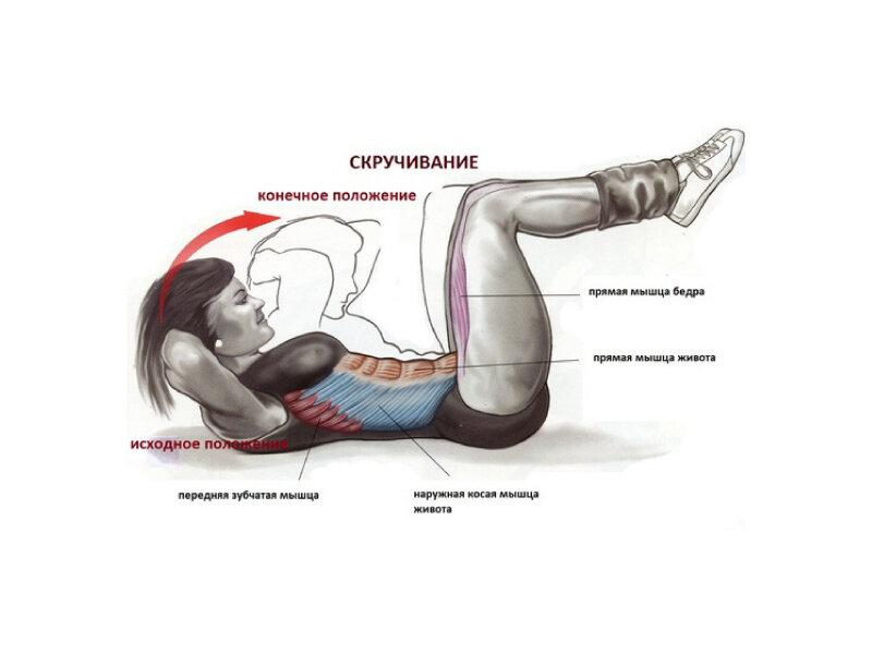 Комплекс упражнений на тренировку косых мышц живота   rulebody.ru — правила тела