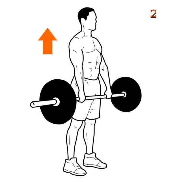Становая тяга сумо: техника выполнения, в чем отличие от классики